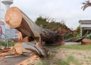 Prefeitura apresenta balanço dos estragos do temporal de quinta feira