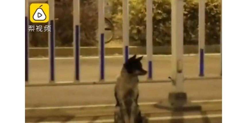 O cão que está há 80 dias em estrada esperando dona que morreu