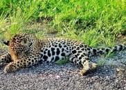 'Rodovia da Morte': seis animais morrem atropelados por dia na...