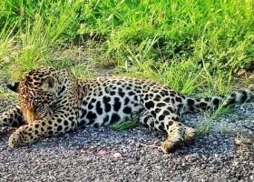 'Rodovia da Morte': seis animais morrem atropelados por dia...