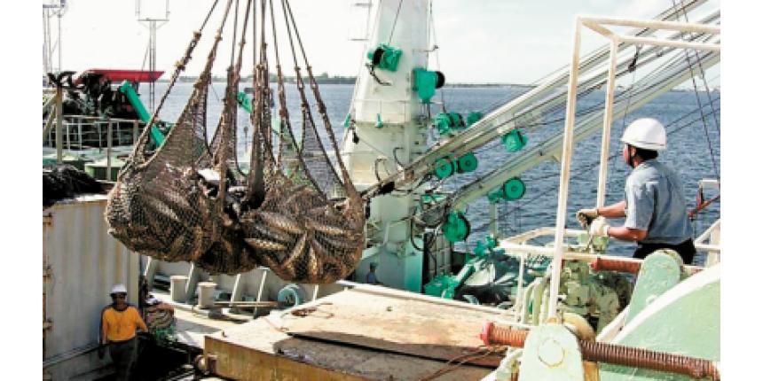 A briga do atum