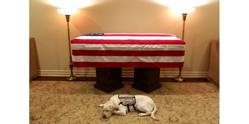 Cachorro que acompanhava George H.W. Bush é visto deitado ao lado do caixão