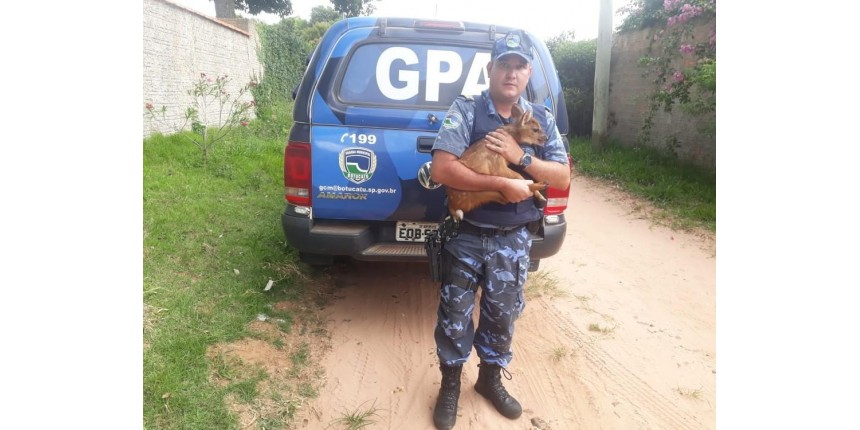 Guarda Municipal resgata filhote de veado-catingueiro