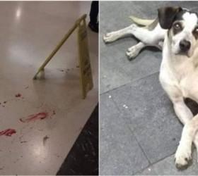 Morte de cachorro em loja do Carrefour gera onda de...