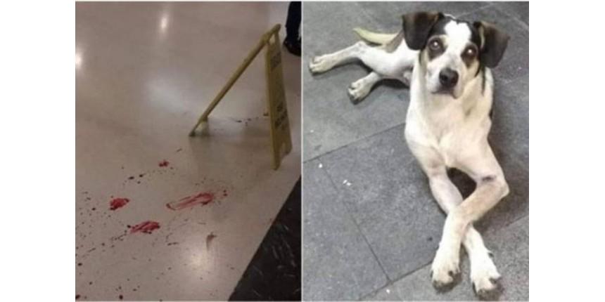 Morte de cachorro em loja do Carrefour gera onda de protestos