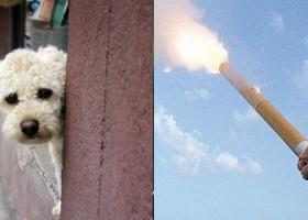 Saiba como proteger os animais do barulho dos fogos de artifício
