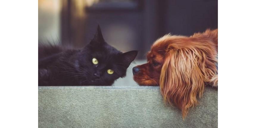Saiba como reduzir o estresse dos pets em datas comemorativas