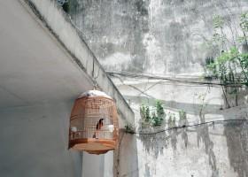 Índia proíbe pássaros em gaiolas em decisão histórica