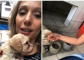 Luisa Mell resgata 1,5 mil animais em canil: 'Campo...