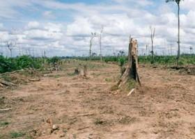 Extinção ameaça um milhão de espécies, diz estudo