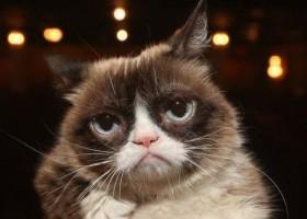 Morre Grumpy Cat, gata 'rabugenta' que se tornou uma lenda da internet