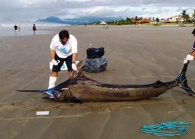 Peixe gigante raríssimo de mais de 200 Kg é achado em praia...