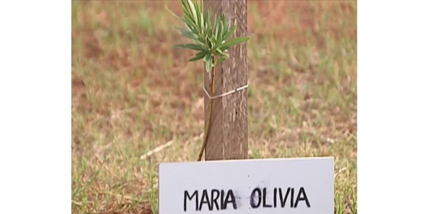 Médico que distribui muda a cada parto feito contabiliza mais de mil árvores plantadas: 'Trabalho de formiguinha'