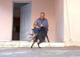 Adestrador dá dicas para quem tem cachorro 'arteiro' dentro...