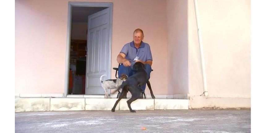 Adestrador dá dicas para quem tem cachorro 'arteiro' dentro de casa