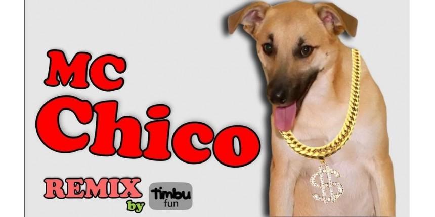 Famoso por destruir quarto, cão Chico vira tema de funk: 'Daqui a pouco estamos na Nasa', diz dona