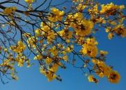 Primavera começa na segunda com temperaturas acima da média e...