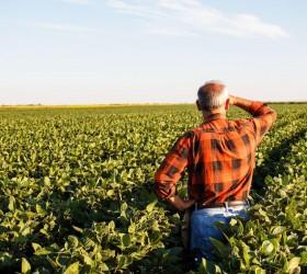 Produtores rurais poderão refinanciar dívidas com juros de 8% ao...