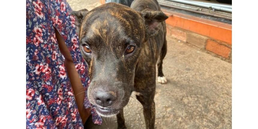 Há um mês, cachorro espera na porta de unidade de saúde pelo dono que morreu no local