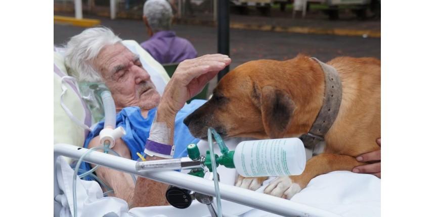 Idoso internado se emociona ao receber visita do cachorro de estimação, e filha diz: 'Chorava todo dia'
