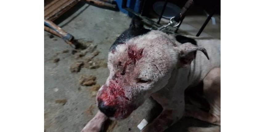Justiça de SP manda prender 22 envolvidos em rinha de cães