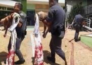 Mulher que esfaqueou cachorro do companheiro durante briga é multada...