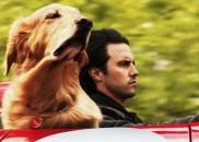 Filmes com animais que fazem qualquer pessoa chorar