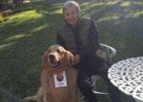 Lar para idosos usa pet terapia para amenizar falta de visitas