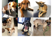 Cães encontrados em situação de risco na SP-333 são recolhidos...