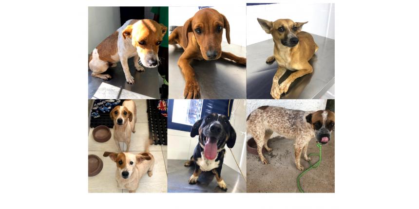 Cães encontrados em situação de risco na SP-333 são recolhidos pela Entrevias