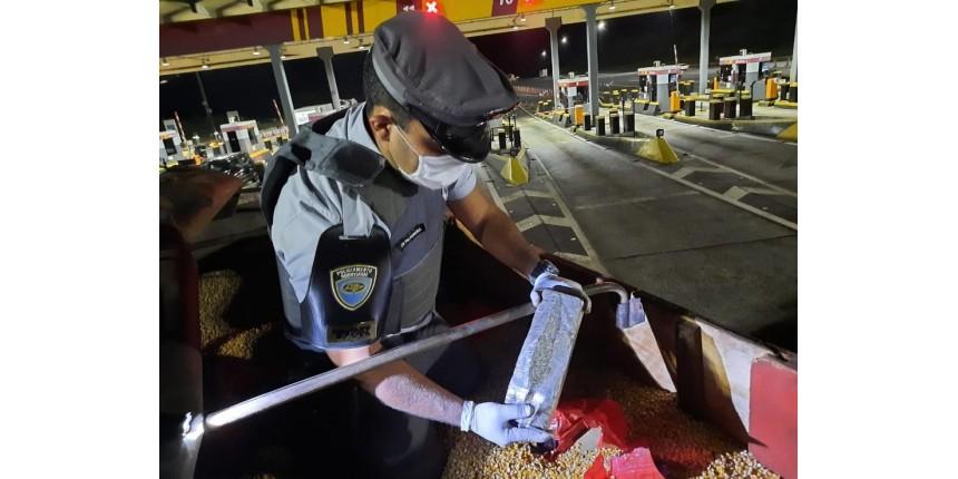 Mais de 8 toneladas de maconha são achadas em caminhão carregado com milho no interior de SP