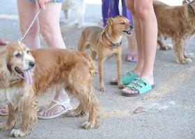 Alerta: tutores de animais de estimação devem ficar atentos a produtos de...