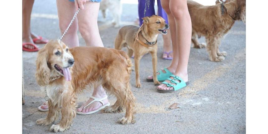 Alerta: tutores de animais de estimação devem ficar atentos a produtos de limpeza