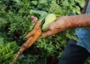 Governo repassa R$ 72,9 milhões a estados para a agricultura...