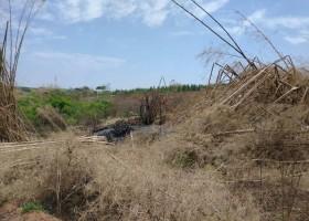 Polícia Ambiental multa proprietário de sítio em quase R$...