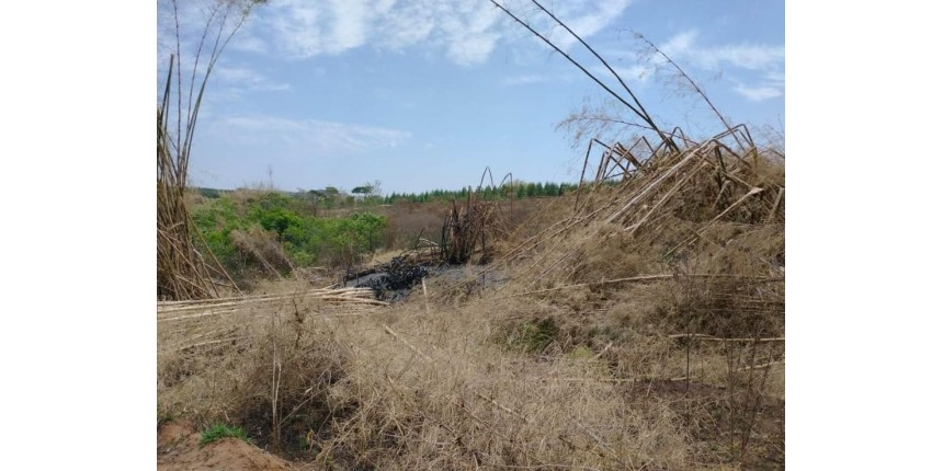 Polícia Ambiental multa proprietário de sítio em quase R$ 25 mil por destruir vegetação nativa em Marília