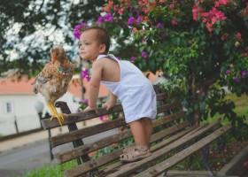 Amizade entre bebê e 'franguinho' de estimação faz sucesso na web: 'São...