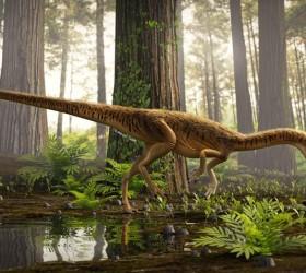 Anunciada descoberta de nova espécie de antepassado do tiranossauro rex