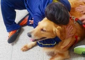 Guarda Civil usa cães em projeto de desenvolvimento social...