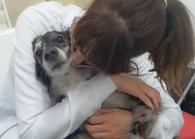 Veterinária alerta para sintomas de ansiedade e depressão em animais de estimação