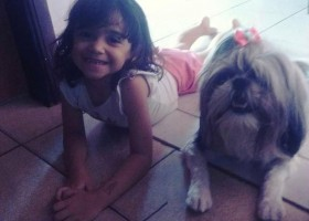 Cachorra morre após evitar ataque de pitbull a menina de 8 anos;...