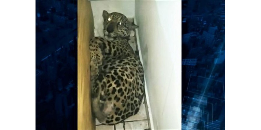 Casal é preso por tráfico e maus-tratos a animais silvestres